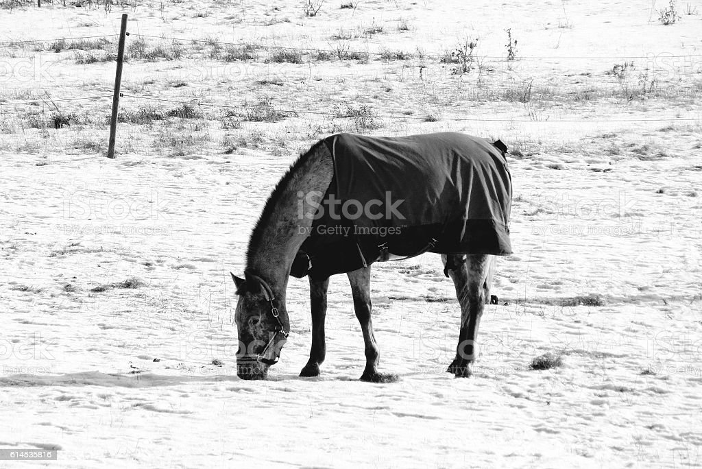 Cold Horse stock photo