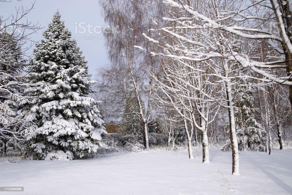 cold landscape royalty-free stock photo