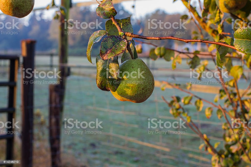 Cold morning in October of countryside, arousal stock photo