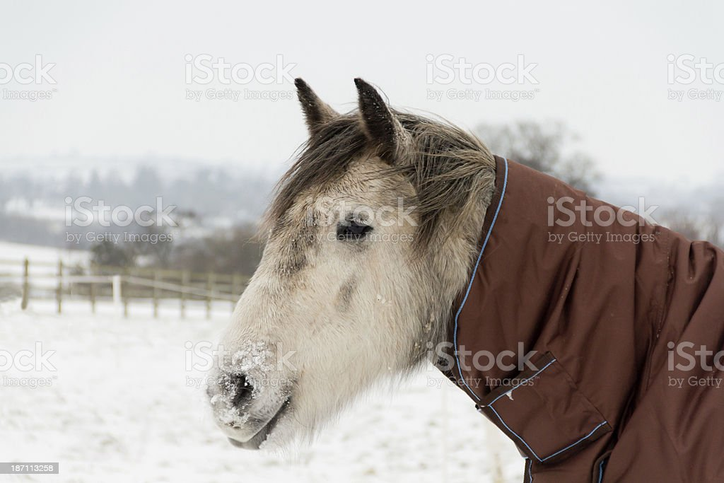 Cold nose-warm toes. stock photo