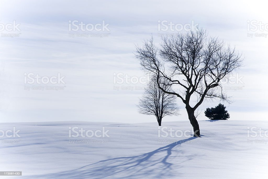 Cold outside Series royalty-free stock photo