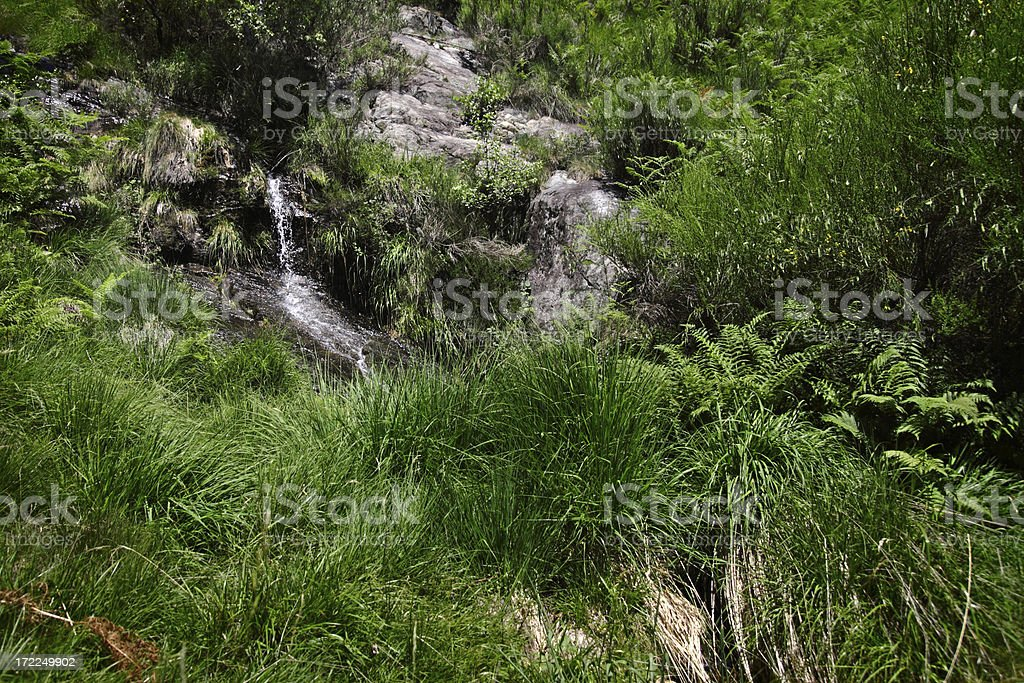 Cold Spring Water royalty-free stock photo