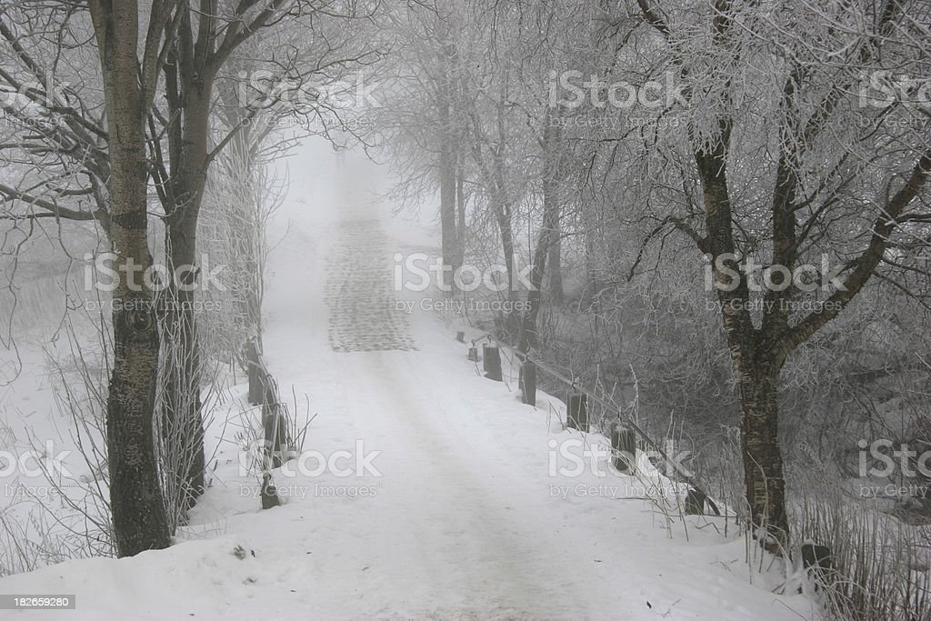 Cold trees stock photo