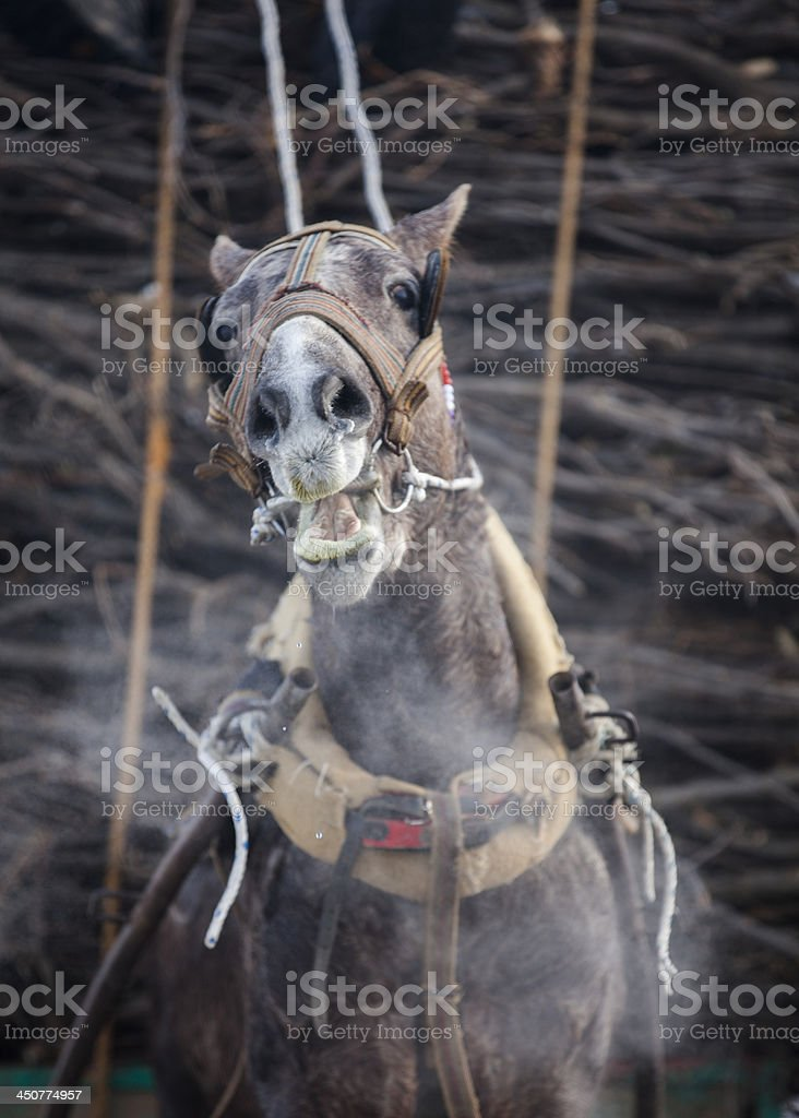 Cold weather and horse-drawn carriage stock photo