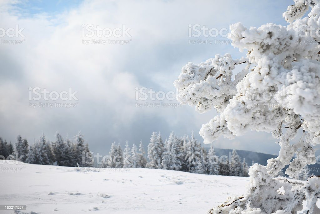 Cold Winter Day royalty-free stock photo