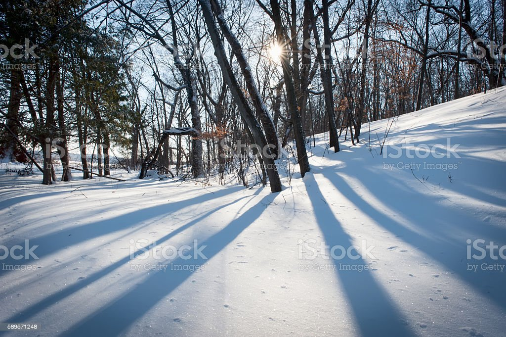 Cold winter day with snow, trees and long shadows stock photo