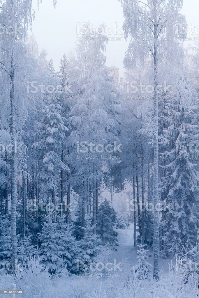 Cold Winter Forest stock photo