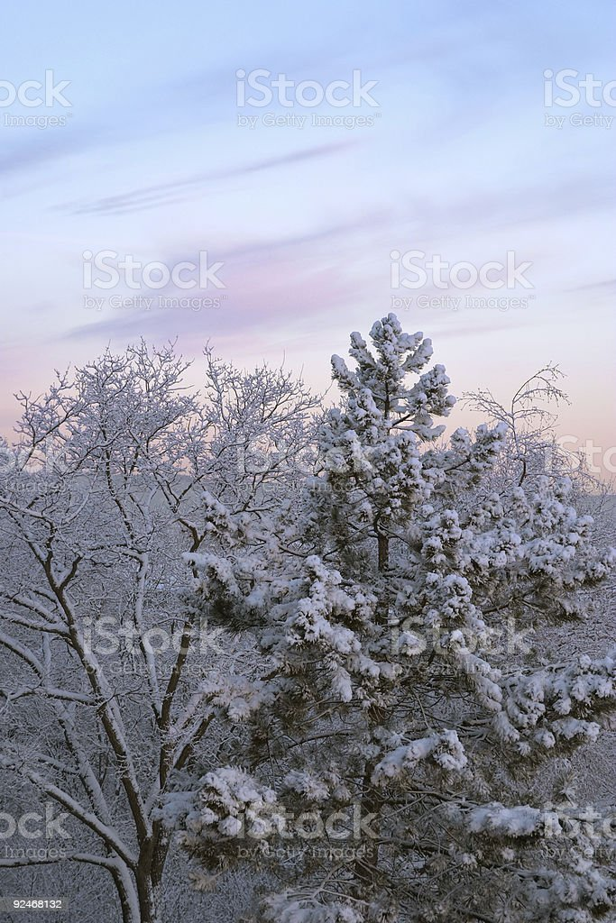 Cold winter morning, dawn: white frozen trees full of snow royalty-free stock photo
