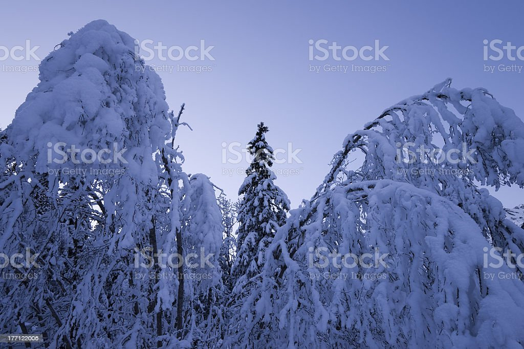 cold winter night royalty-free stock photo