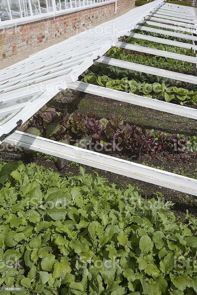 Coldframe with Lettuce stock photo
