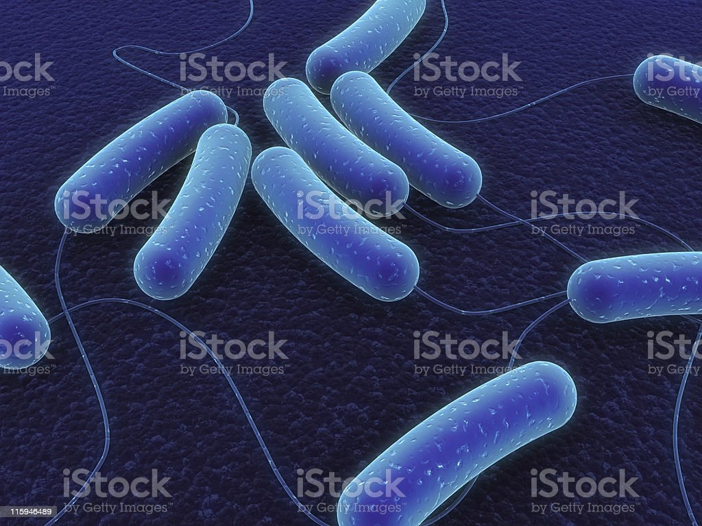 coli bacteria royalty-free stock photo