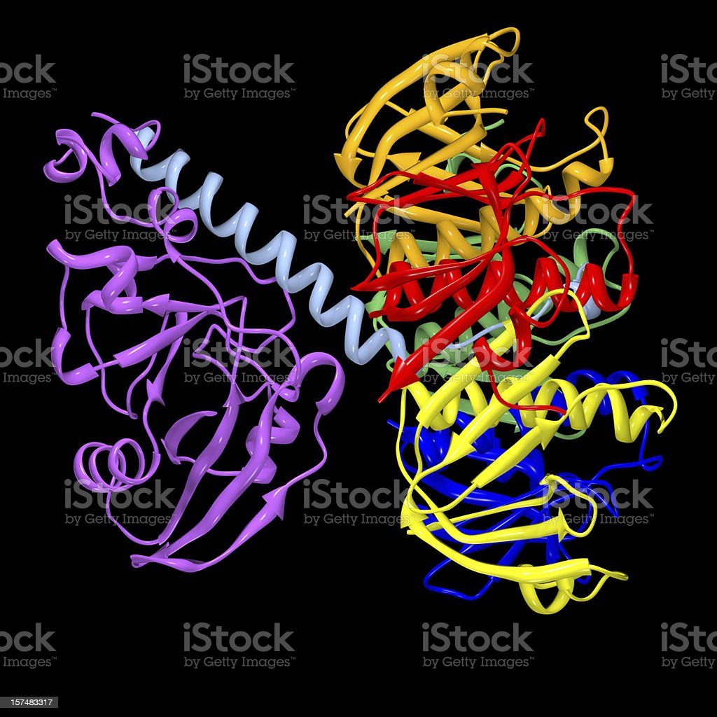 E. Coli Enterotoxin royalty-free stock photo