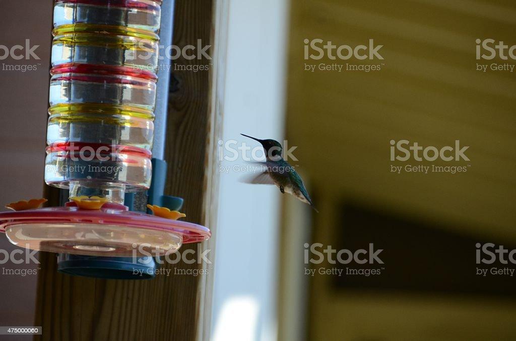 Colibri en vol stock photo