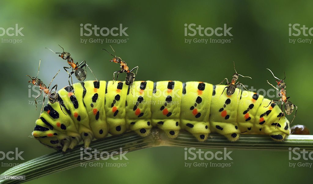 Collage about ants royalty-free stock photo