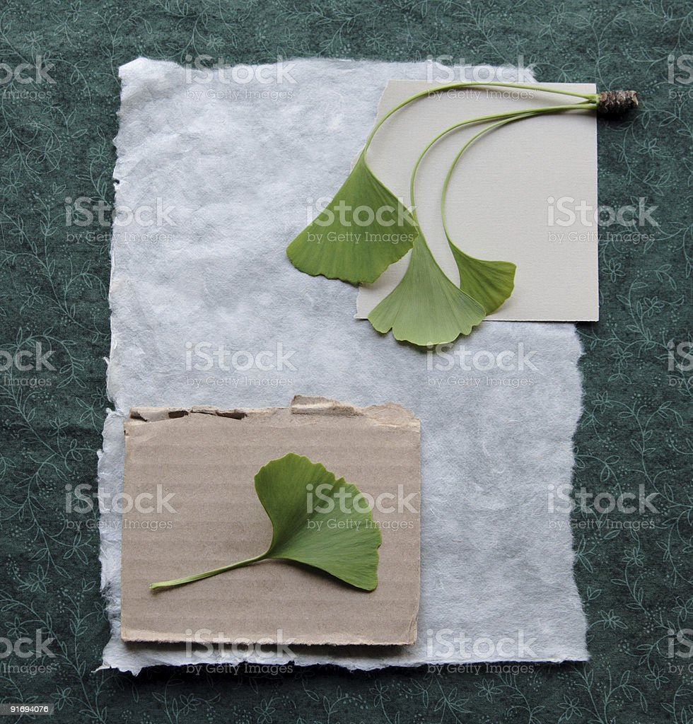 collage background with ginkgo leaves stock photo