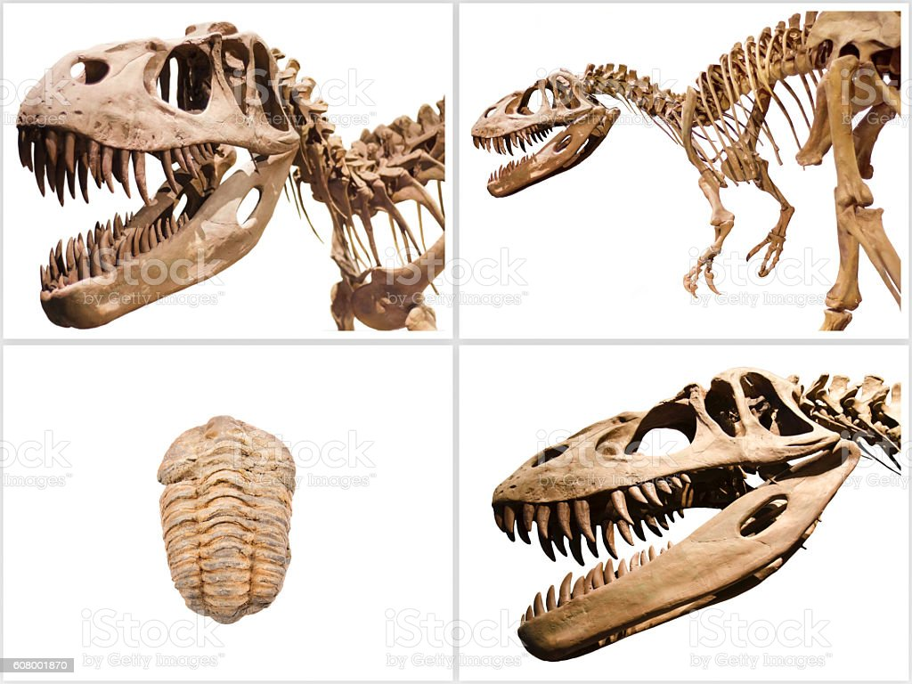 Collage composition of dinosaurs skeletons on white isolated background. stock photo