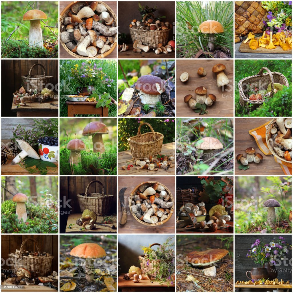 Collage from pictures with mushrooms. stock photo
