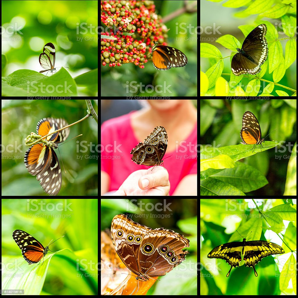 Collage insect butterfly on black background stock photo