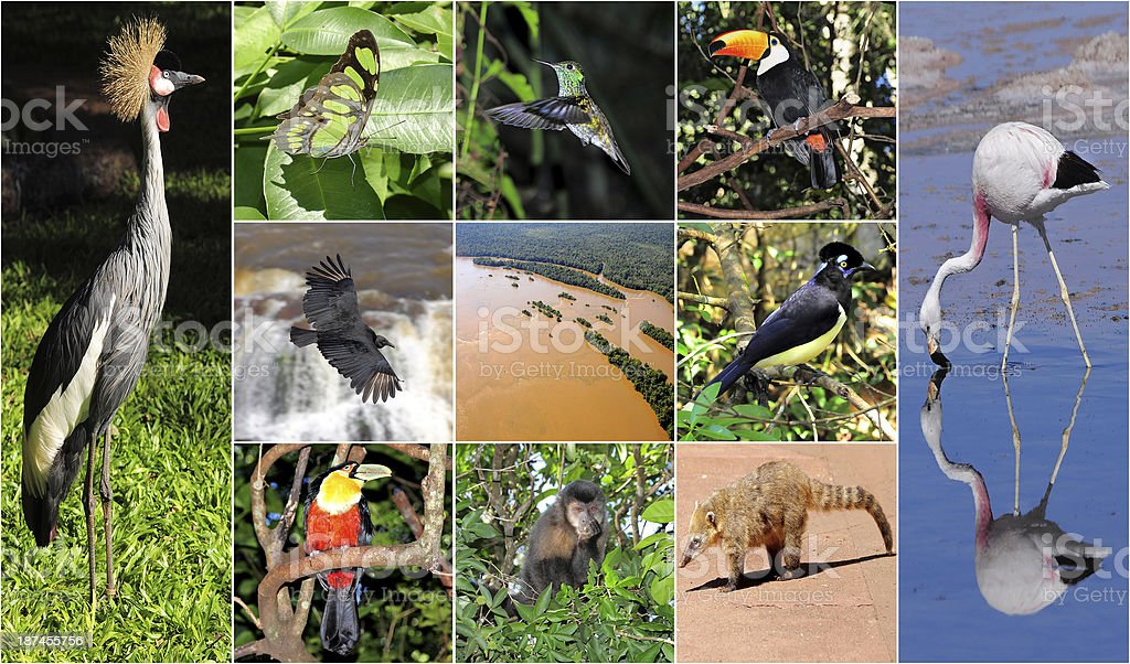 Collage made from Iguazu National park pictures. stock photo