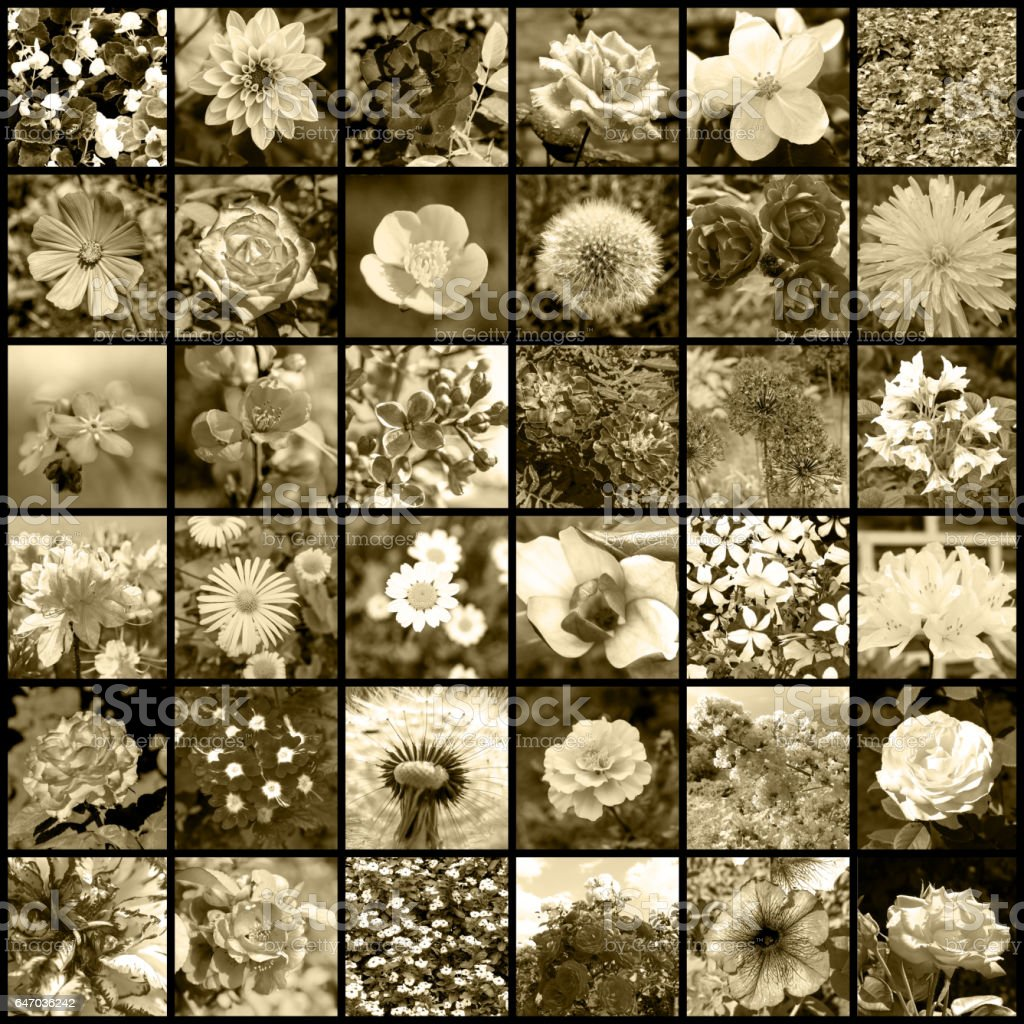 Collage of 36 flowers photos retro filtered stock photo