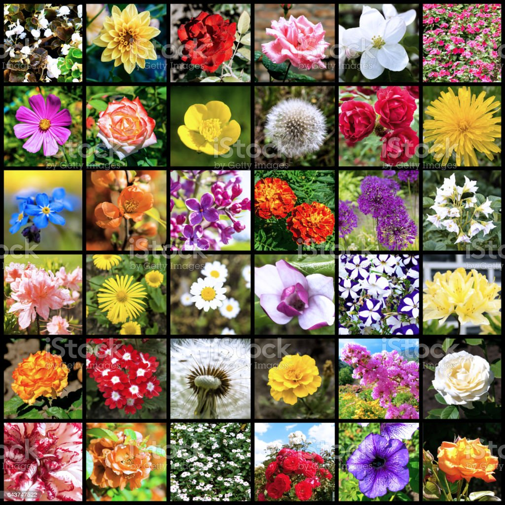 Collage of 36 flowers photos separated by black frames stock photo