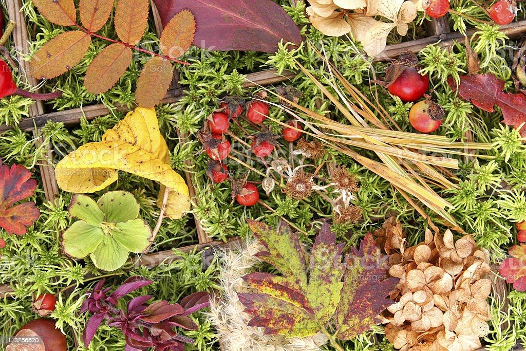 collage de l'automne photo libre de droits
