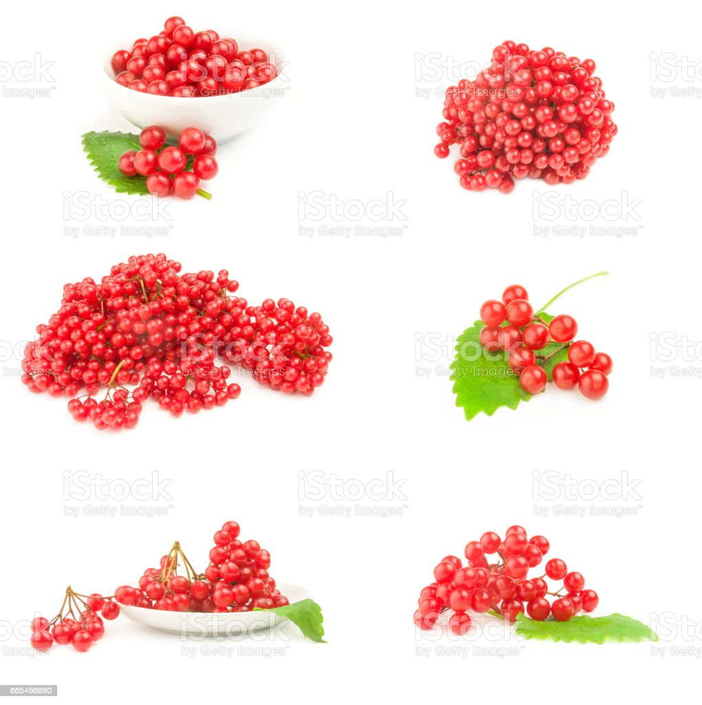 Collage of branch of red viburnum berries  isolated on a white background cutout stock photo