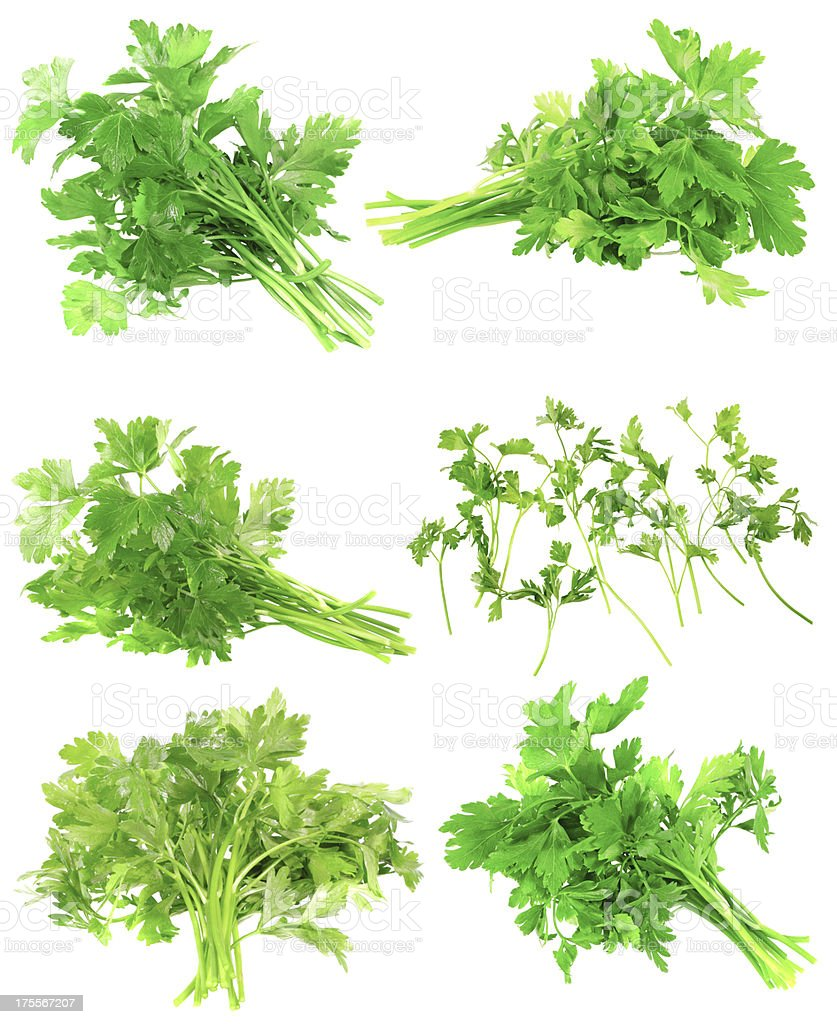 Collage  of Fresh parsley on white. Isolated royalty-free stock photo