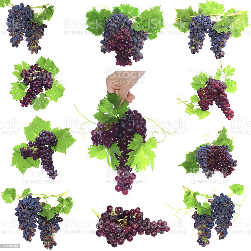 Collage of  grapes with foliage. Isolated royalty-free stock photo