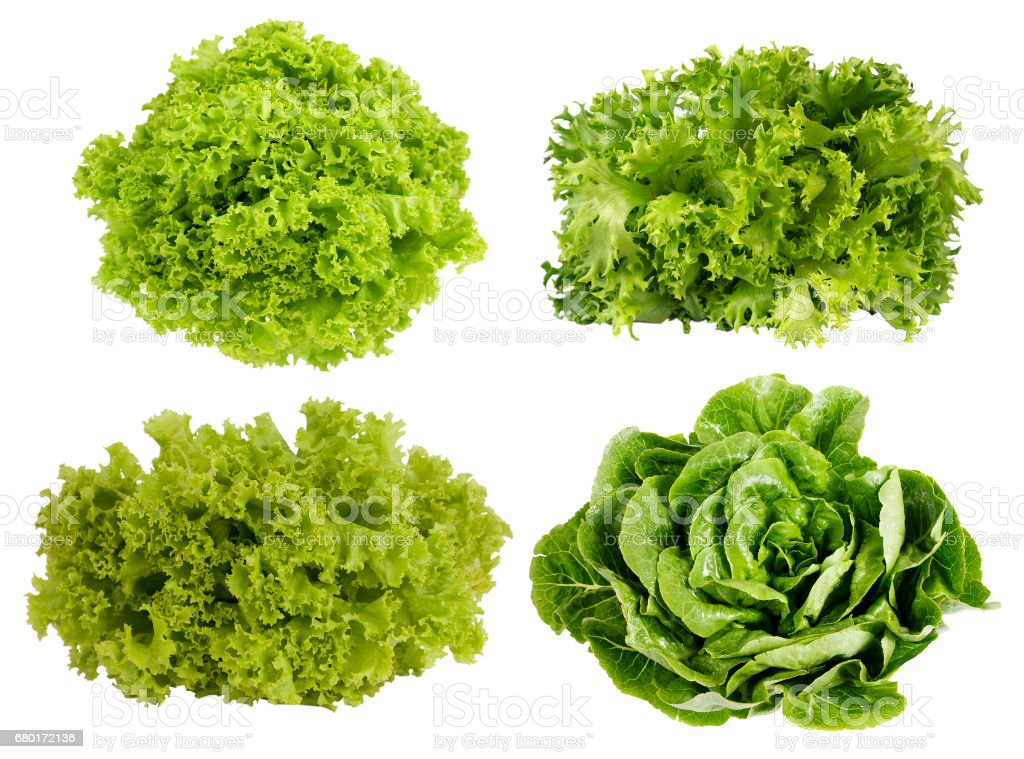 Collage of lettuce isolated on white background. stock photo