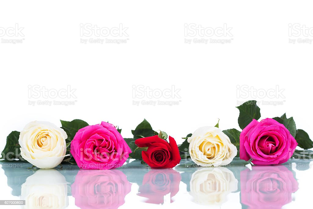 collage of multicolored roses on white background isolated stock photo