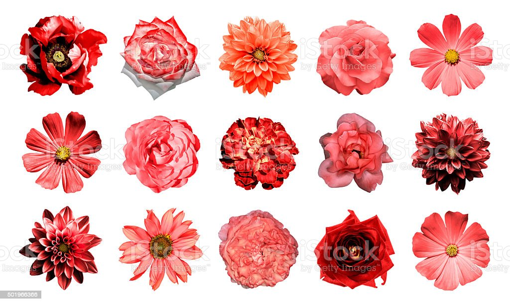 Collage of natural and surreal red flowers 15 in 1 stock photo