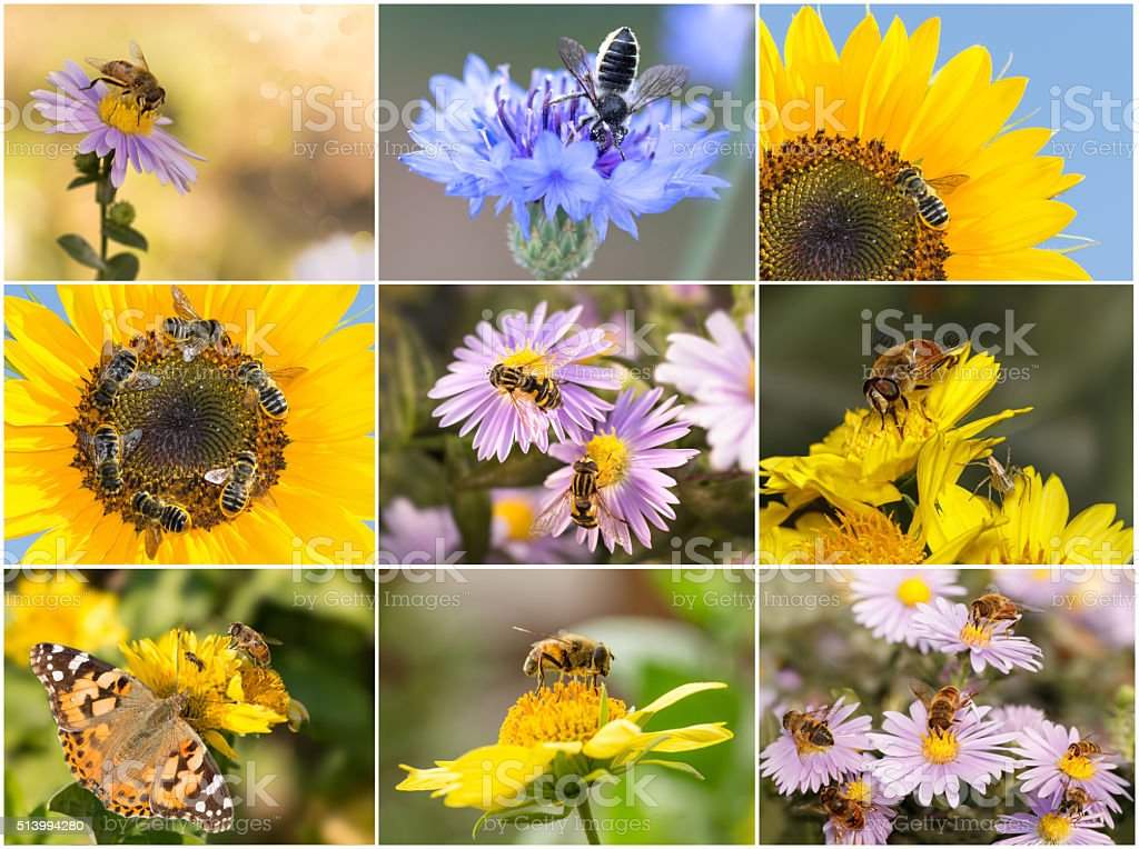 collage of photos of insects. Closeup bees, spiders, hoverflie stock photo