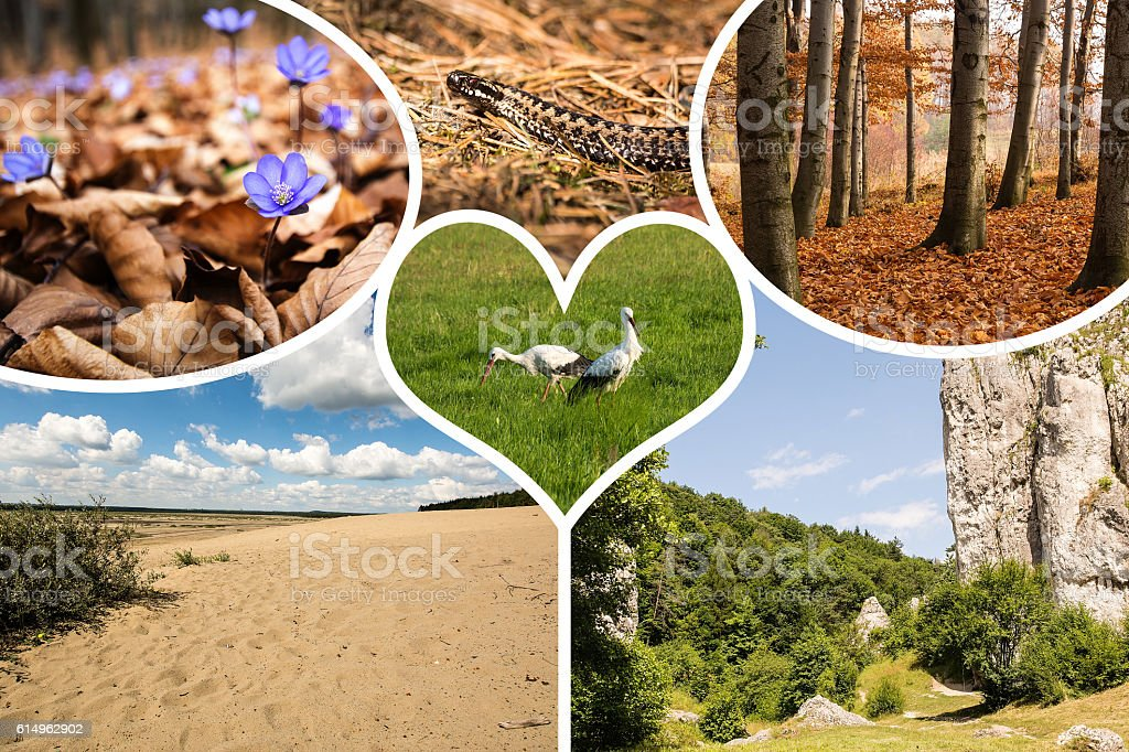 Collage of poland nature images - my photos stock photo