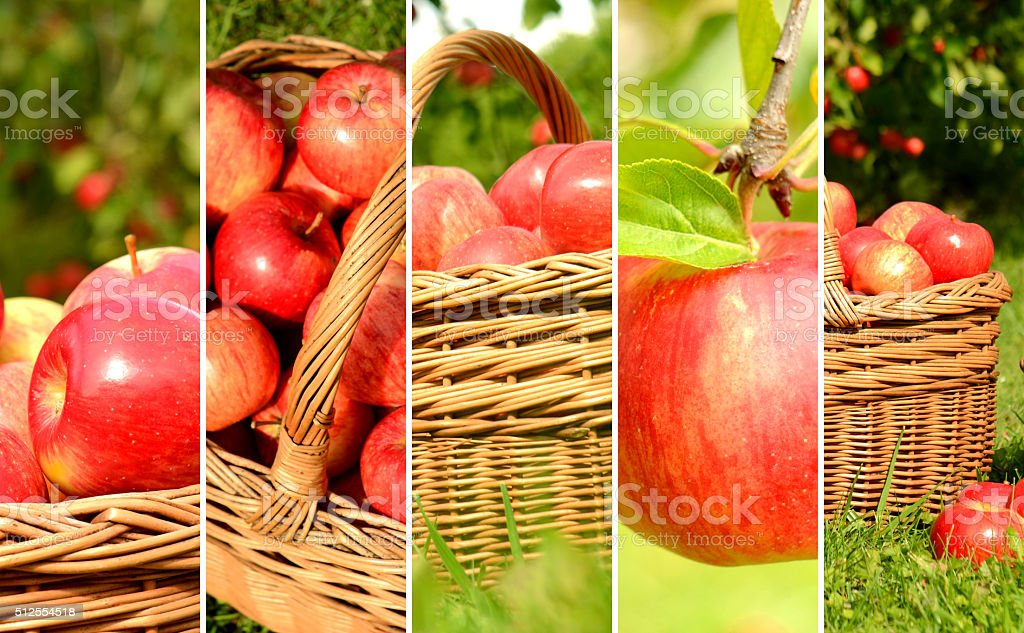 Collage of red apples in a wicker basket stock photo