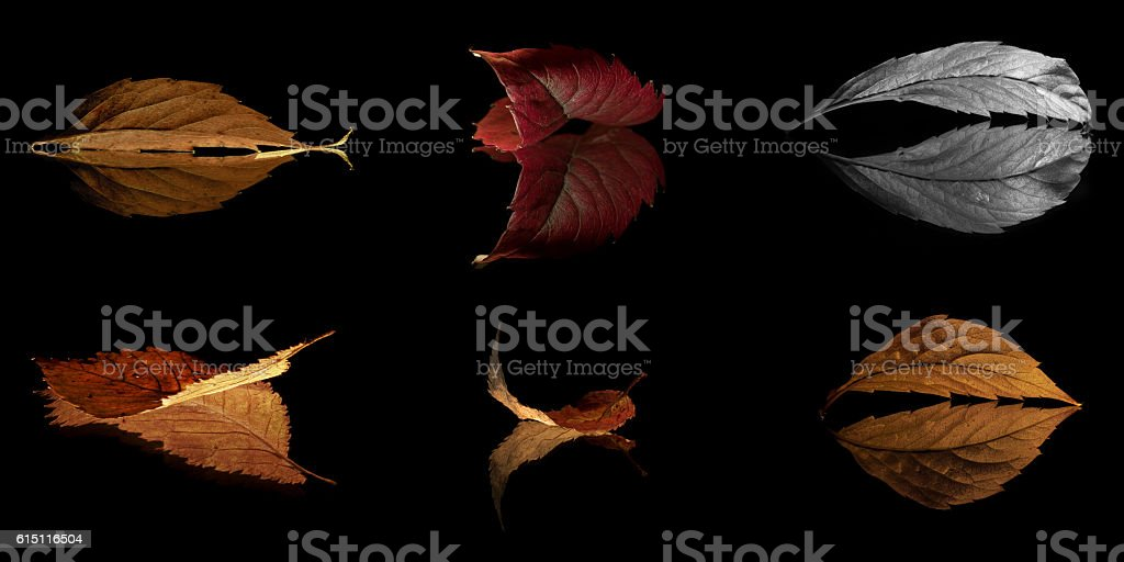 Collage of six autumn (Fall) leaves on black background stock photo