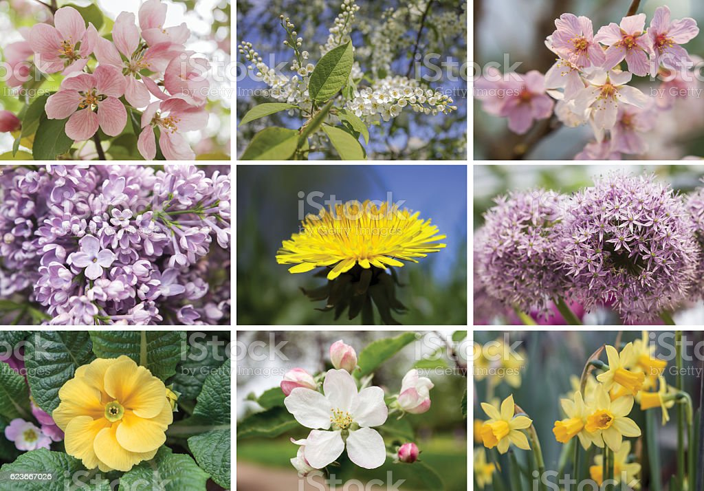 Collage of spring flowers stock photo