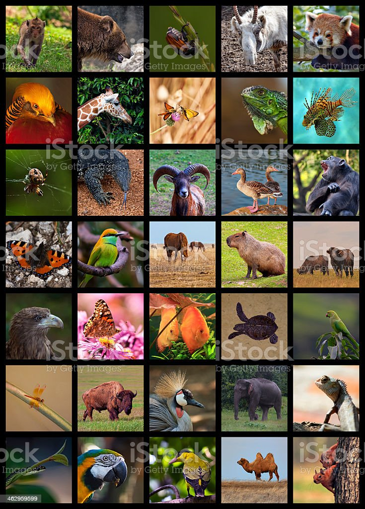 Collage of various wild animal portraits stock photo