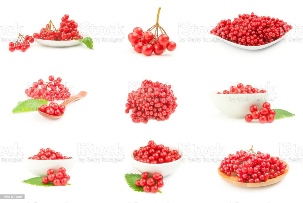 Collage of viburnum berries  on a background stock photo