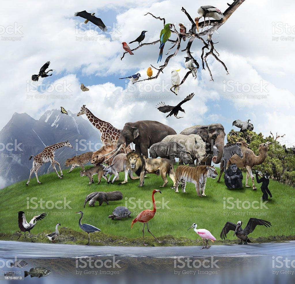 Collage Of Wild Animals And Birds stock photo