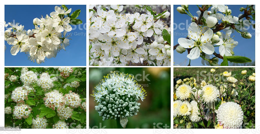 Collage photography with white flower stock photo