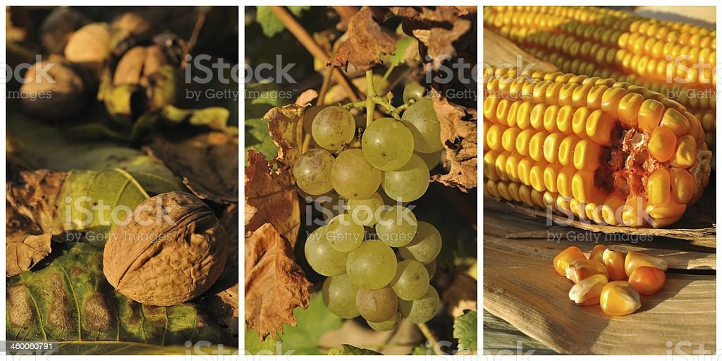 Collage z jesień owoców i warzyw zbiór zdjęć royalty-free