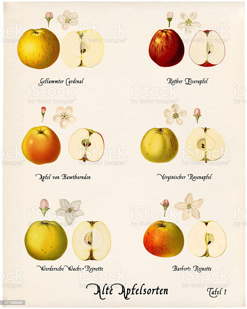 Collage with illustrations of apple varieties, Plate 1 royalty-free stock photo