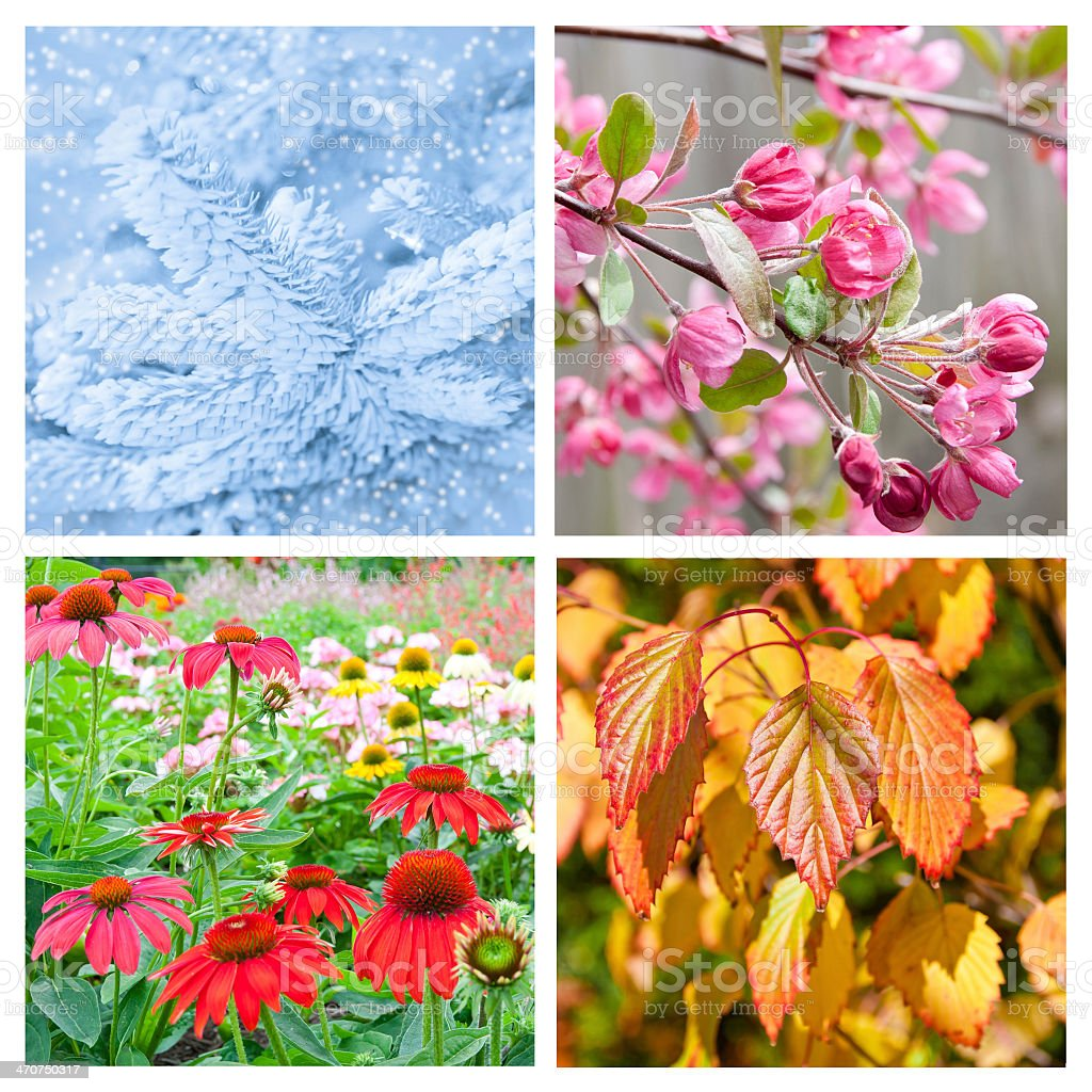 Collages showing the four seasons stock photo
