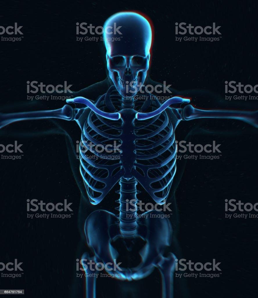 Collar bone xray. Human anatomy skeletal system, torso, ribs. stock photo