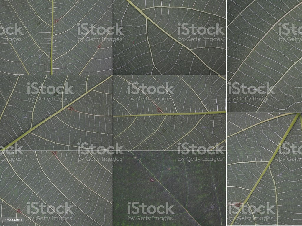 Collected leaves macro texture background isolated on white background stock photo