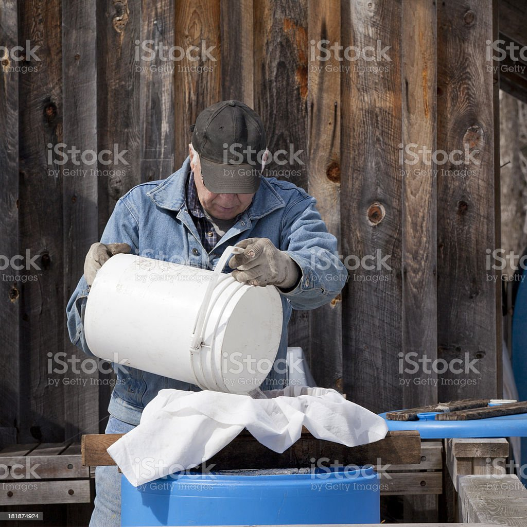 Collecting and Filtering Maple Sap royalty-free stock photo