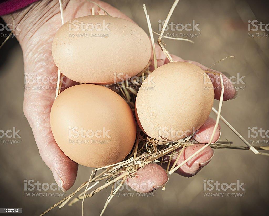 Collecting Free Range Eggs stock photo