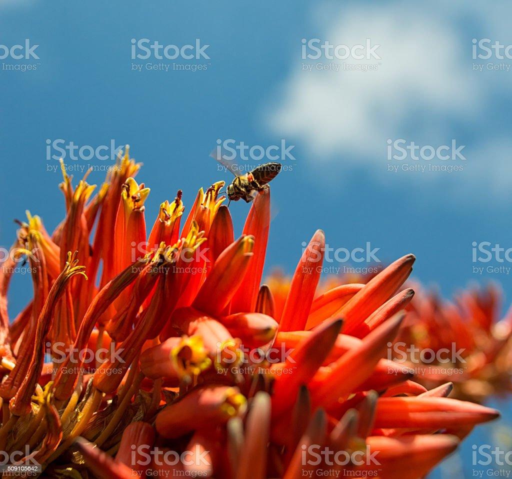 Collecting Nectar stock photo