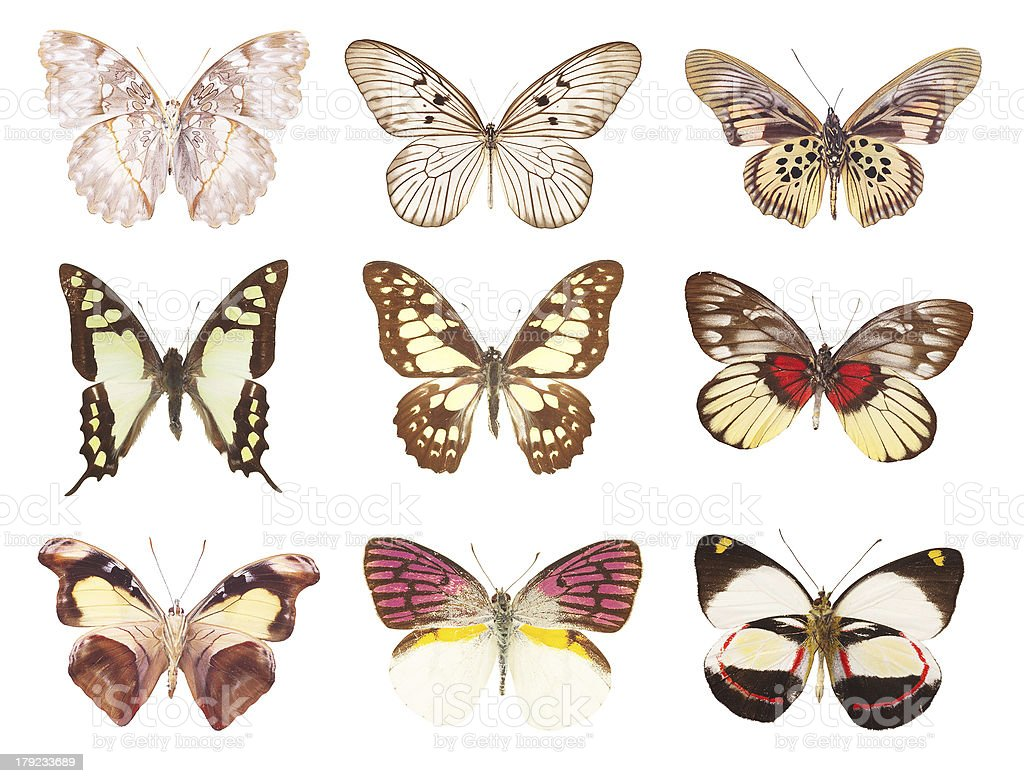 collection butterfly on a white background royalty-free stock photo